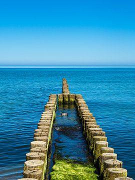 Groyne aan de kust van de Oostzee op de Fischland-Darß van Rico Ködder