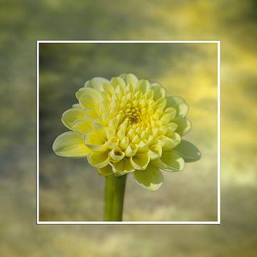 Gele dalie in frame van Ursula Di Chito