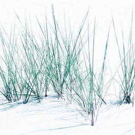 Feines Dünengras - Abstraktion von Reiner Würz / RWFotoArt
