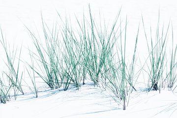 Feines Dünengras - Abstraktion