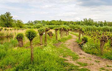 Windungspfad im Nationalpark De Biesbosch von Ruud Morijn