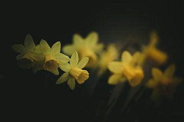 Frühlingsblumen Die schönsten Blumen im Frühling von Thilo Wagner