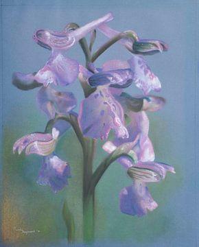 Wilde Orchidee sur Mandy Hogervorst
