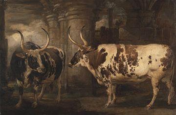 Porträts von zwei außergewöhnlichen Ochsen, Eigentum des Grafen von Powis, James Ward