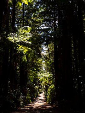 Riesige Mammutbäume in der Nähe von Rotorua Neuseeland von Rik Pijnenburg