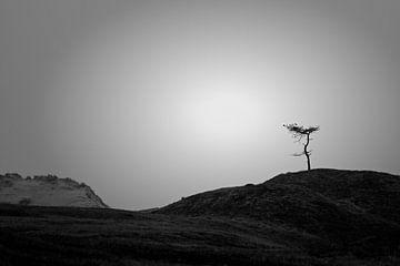 Einsamer Baum von René van der Horst