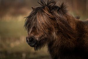 Pony portret van Jeroen Mikkers