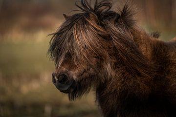 Pony-Porträt von Jeroen Mikkers