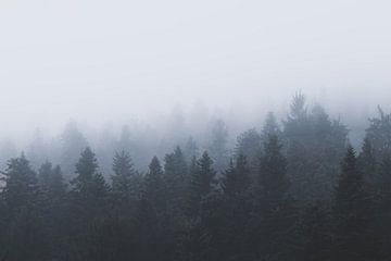 Mysterieus bos in de mist van Patrik Lovrin