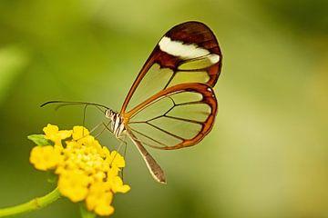 Schmetterling aus Glas von Roosmarijn Bruijns