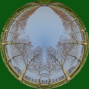 Rondje bomen, groen.