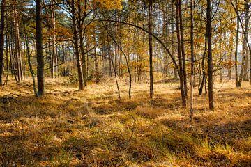 Het bos in de herfst van Johan Vanbockryck
