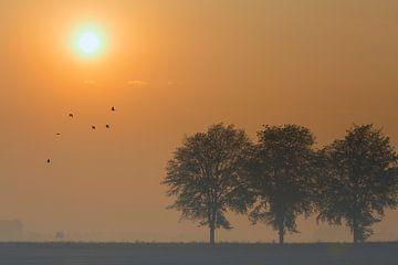 Drie bomen von Erwin Goossens