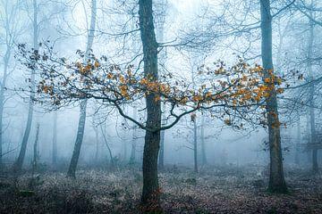 Winter leaves van Thomas Jansen