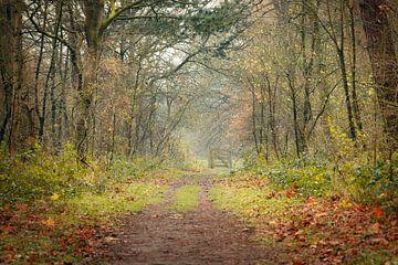 Waldweg von Mireille Breen