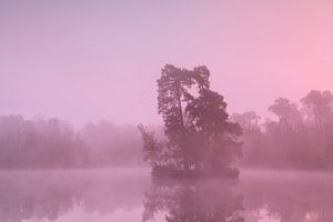 In the purple mist