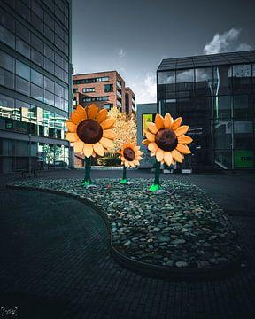 licht gevende zonnebloemen vind je die midden in de stad. van Sabine Brederode Photography