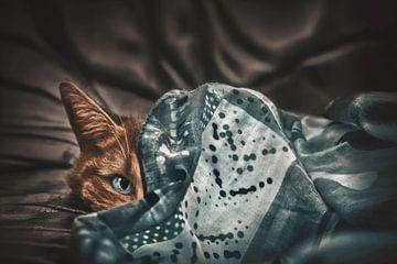 Een complementaire kat van Elianne van Turennout