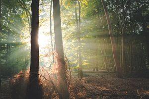 Hoop en kracht in het bos van