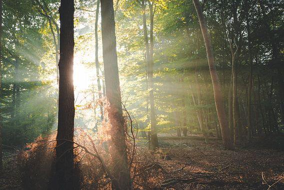 Hoop en kracht in het bos