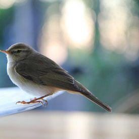 Vogeltje van Jan van Kemenade