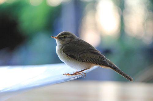 Vogeltje van
