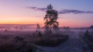 Rucphense-Heide von Maurice Vroegrijk