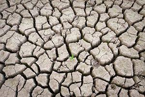 Cracked Earth sur Kim Dalmeijer
