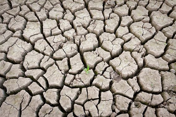 Cracked Earth van Kim Dalmeijer