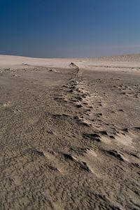 Zand en Wind van