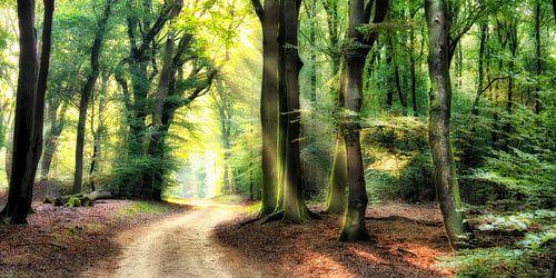 Winding path through the forest landscape edition sur
