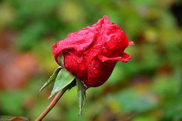 Roos van Annemarie Goudswaard