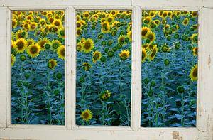 Zonnebloemenboerderijraam