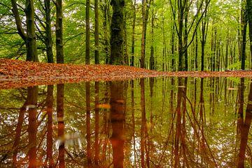 Bos reflectie in een beukenbos van Sjoerd van der Wal