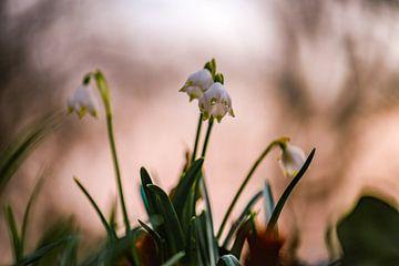Blumen Teil 57 von Tania Perneel