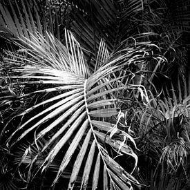Palmblad van Dorit Fuhg