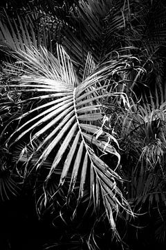 Palmenblatt von Dorit Fuhg