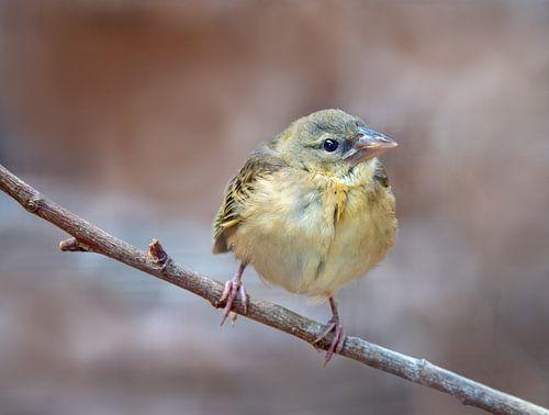 Jong vogeltje op een uitlopende tak