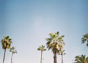 Palmbomen in Barcelona Spanje Europa | blauwe lucht, groene palmen Tropische sfeer van