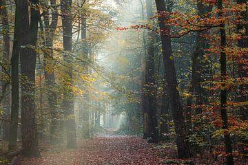 Nebliger Herbstmorgen Zeisterbos Zeist von Peter Haastrecht, van