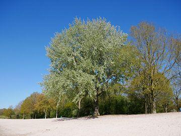 Grauwe Abeel in het voorjaar. van Wim vd Neut