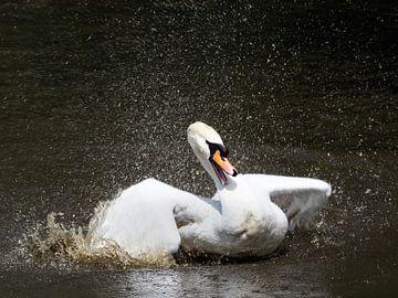Splash van Barry Jansen