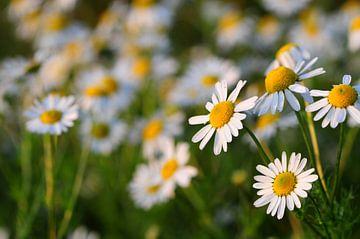 bloemen sur Jan Roelof Brinksma