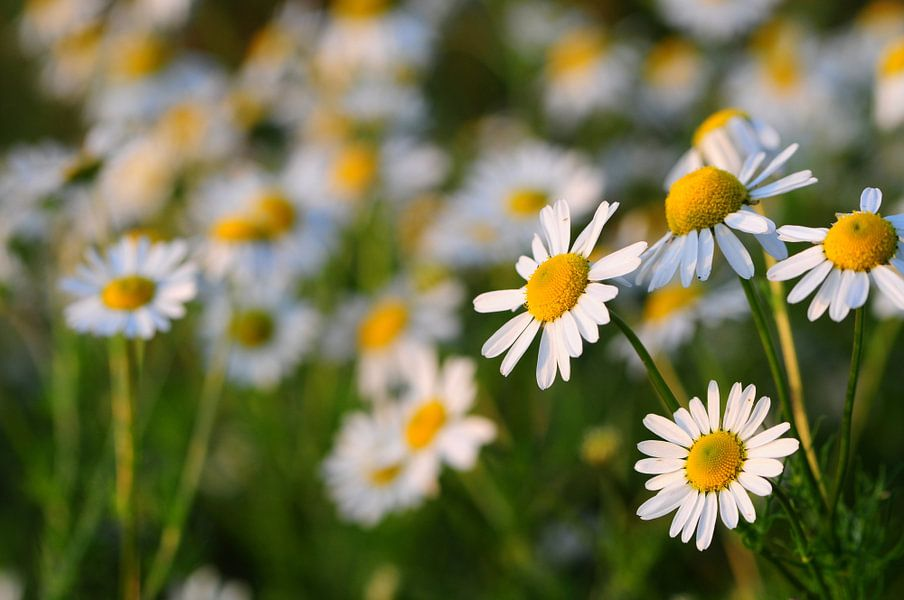 bloemen van Jan Roelof Brinksma