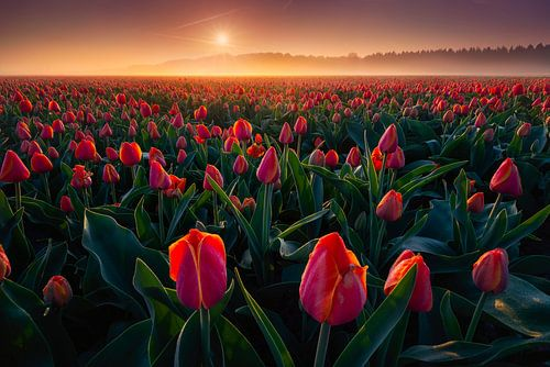 Rode Tulpen van Albert Dros