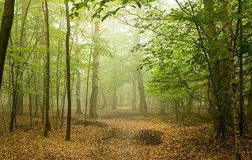 Forest autumn von Nicole Nagtegaal