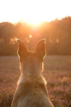 Hundeportrait von Aukelien Minnema