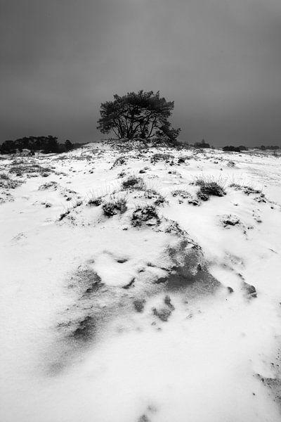 Sneeuw en Zand III van Mark Leeman