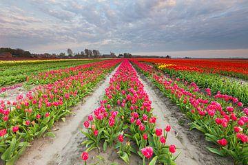 Bollenveld in Groningen von Ron Buist