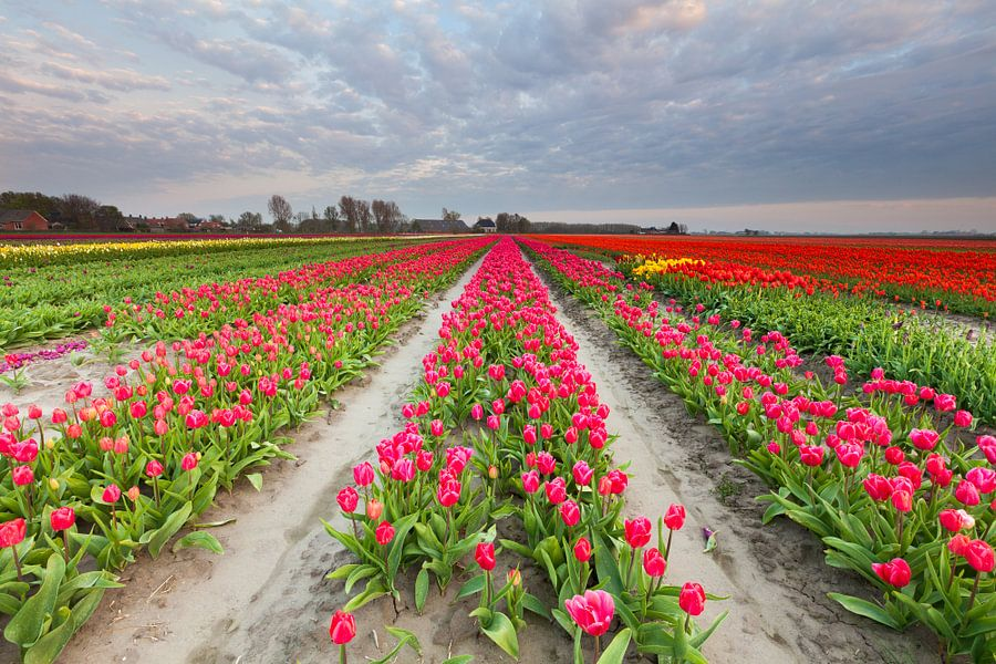Bollenveld in Groningen van Ron Buist